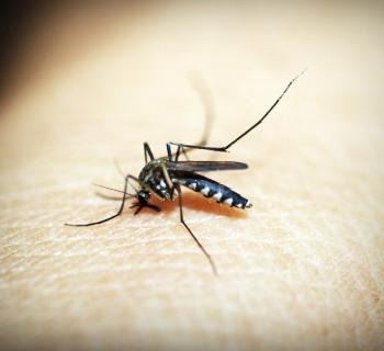 Elektrostatički reketi dobivaju rat protiv komaraca